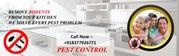 Pest Control Near Me Bahadurgarh